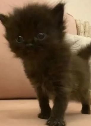 قطط لطيفة للبيع 10