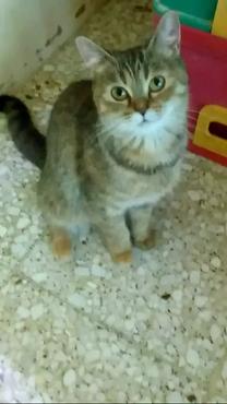 قطط منزلية باعمار مختلفة