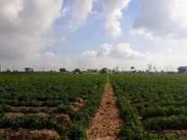 قطعة ارض للبيع بشمال التحرير البحيرة...