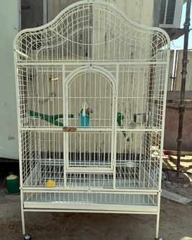 Bird cage for sale 10