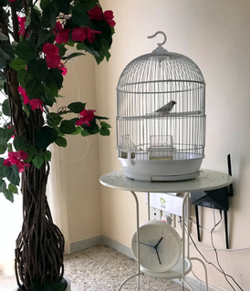 Bird cage with love birds number 2