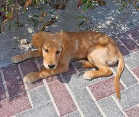 كلبه انثي مسترد للبيع