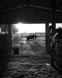 For Rent Porch for horses