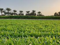 للبيع ارض زراعية 13 فدان بالبحيرة