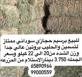 للبيع برسيم حجازي سوداني