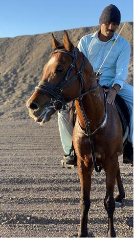 للبيع حصان تقدير صحته ممتازة