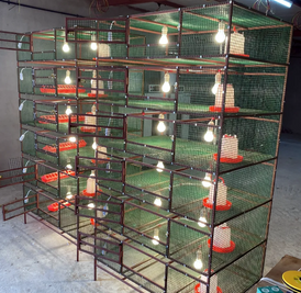 For sale nurseries of 6 boxes