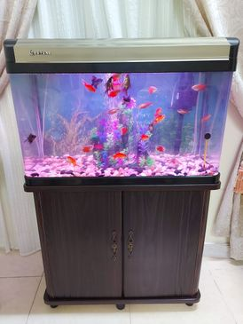 Fish basin for sale