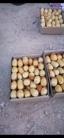 للبيع رطب  خلاص طازج من مزارع الخرج...