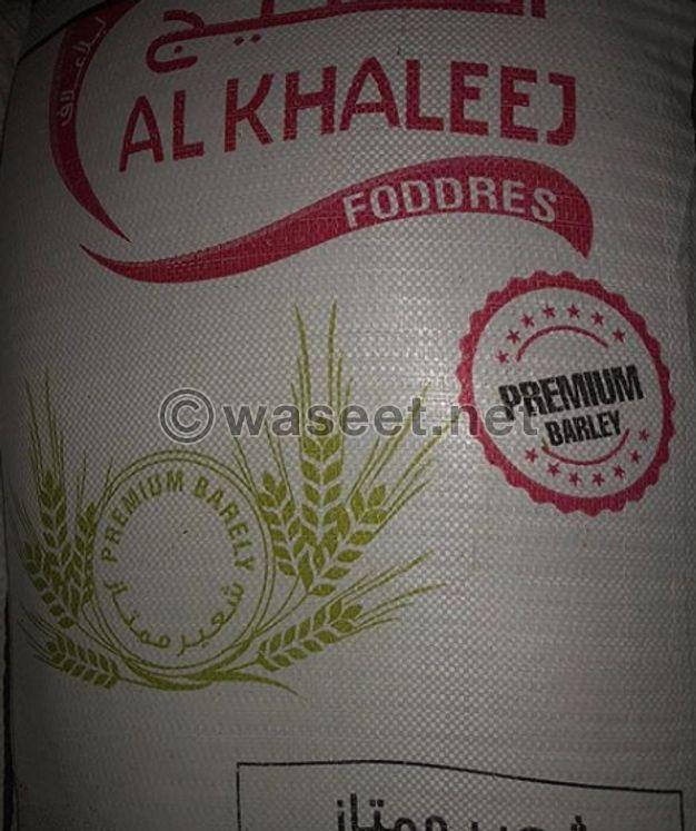 للبيع شعير اماراتى