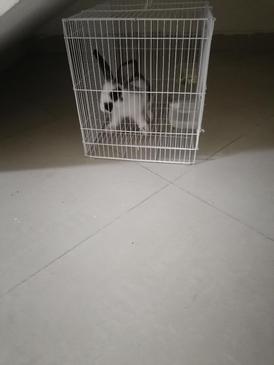 للبيع مع القفص ارانب