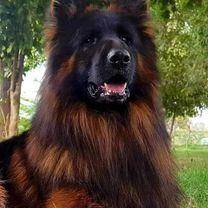 مدرب كلاب k9pro