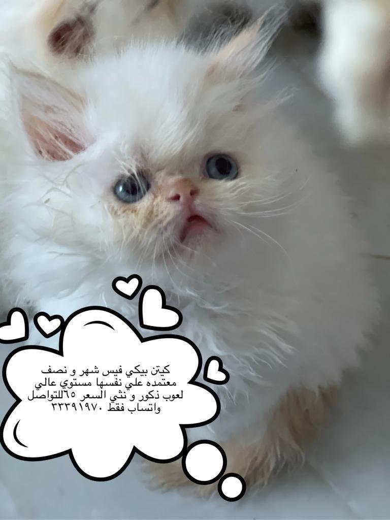 Hamad Al-Dawwar city 10 WhatsApp contact number 33391970