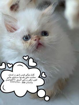 مدينه حمد الدوار 10 رقم التواصل بالواتساب 33391970