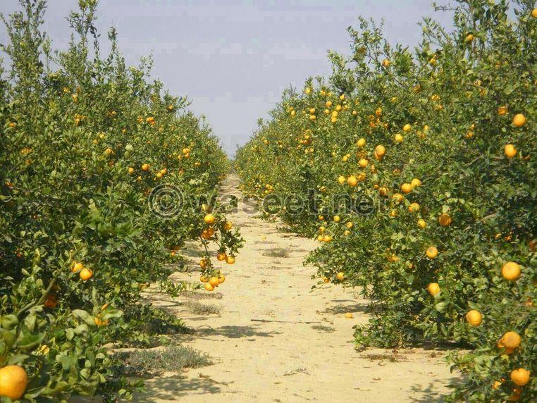 مزرعة من الطراز الرفيع  بالمغرب