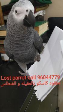 Missing Casco (Parrot)