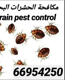 مكافحة الحشرات البحرين