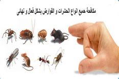 Pest control from ninety-nine dirhams