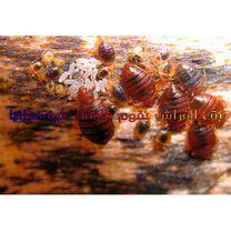 مكافحة الحشرات وابق