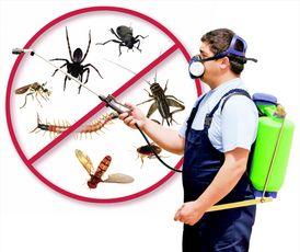 مكافحة كافة انواع الحشرات