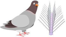 مكافحة كافة انواع الطيور
