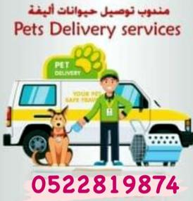 Pet delivery representative 5