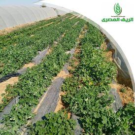 لدينا مزرعة بمساحة 20 فدان