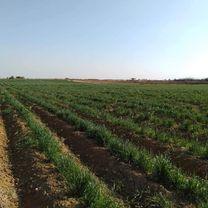 يوجد لدينا أرض زراعية للبيع