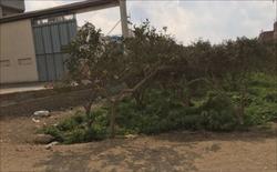 للبيع ارض مزرعة برتقال صالحه للبناء  او الزراعه فى مينيا الق...