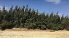 ارض مجهزة للاستثمار الزراعي...