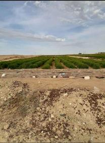 للبيع مزرعة ١٠ فدان  بالفيوم