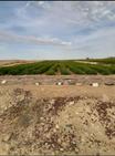 للبيع مزرعة ١٠ فدان  بالفيوم...