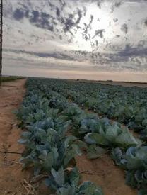 مزرعة ١١ فدان بأرض الخريجين بالفيوم...