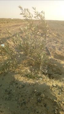 للبيع مزرعة بمحافظة الفيوم