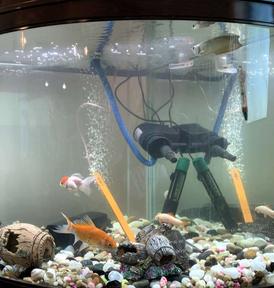 11 سمكة بأنواع مختلفة