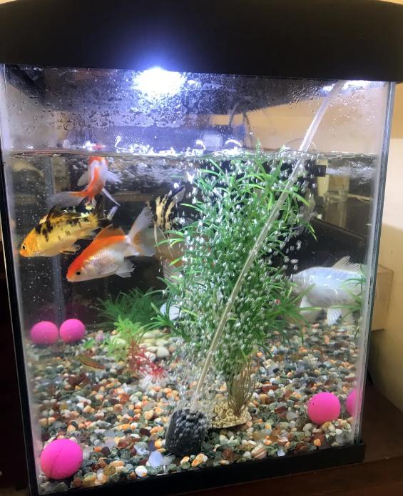 11 fish & aquarium with 2 filter & stone total 500