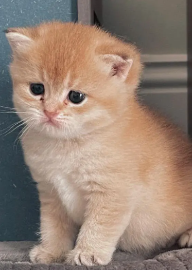 3 قطط سكوتش 11