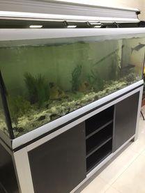 A big Fish Aquarium