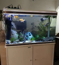 Aquarium / Fish tank for sale with fishes