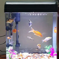 Beautiful Fish Tank With Fishes