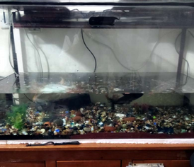 Big Aquarium for sale
