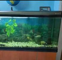 Big Fish Aquarium for Sale