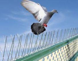 Bird Spike Installation at 30% discount