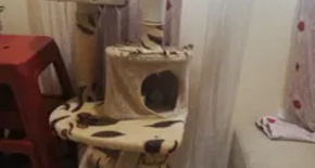 Cat house in good condition
