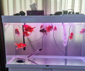 Ciano aquarium for sale