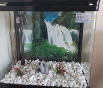 Compact Fish Tank with accessories,with motor