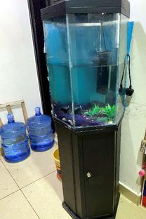 Fish Aquarium Negotiable