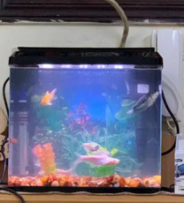 Fish aquarium with fishes for sale
