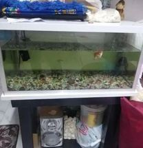Fishes tank with tabel for sale