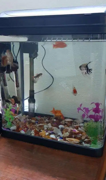 Fishes with New Tank for sale
